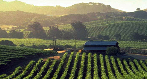 Wine Country of California